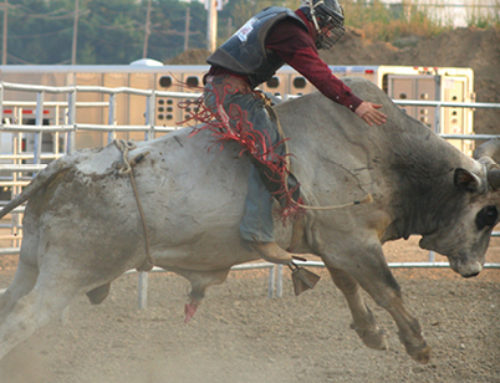 How to run a business — or what I learned from a bull rider.